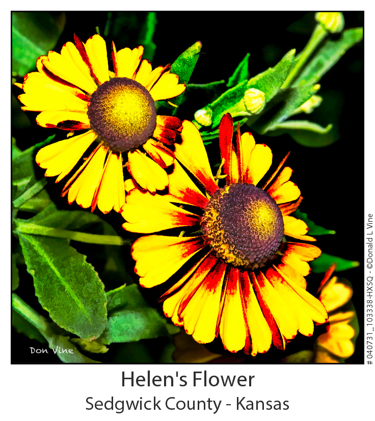 Helen's Flower_040731_103338-HXSQ