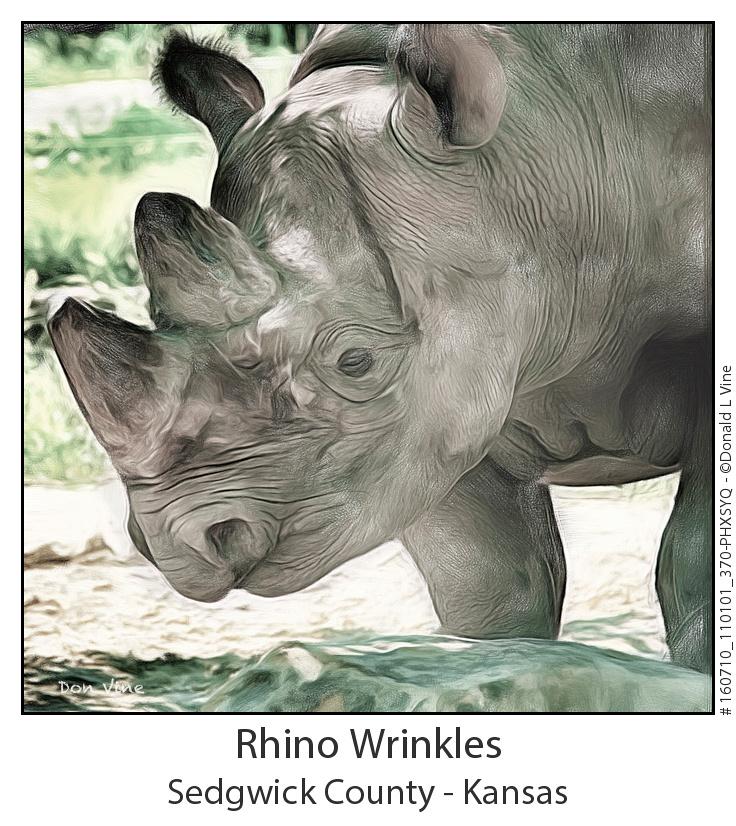 Rhino Wrinkles_160710_110101_370-PHXSYQ