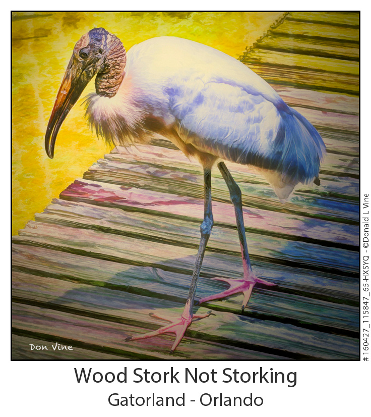 Wood Stork Not Storking_160427_115847_65-HXSYQ