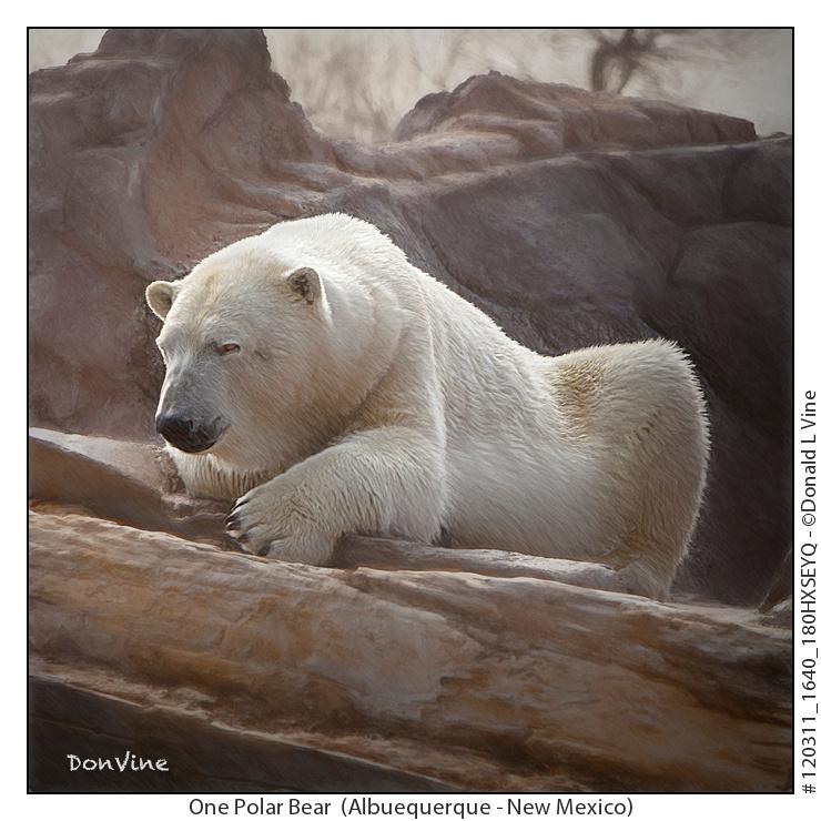 One Polar Bear_120311_1640_180HXSEYQ