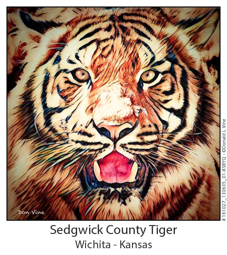 Sedgwick County Tiger_161027_130635_01-XSBYQ