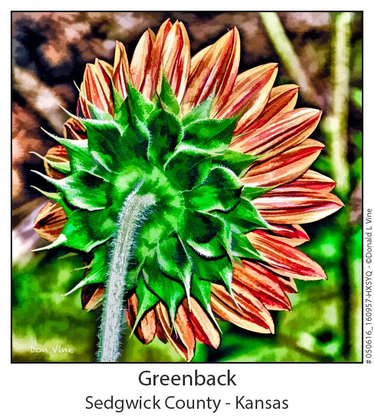 Greenback_050616_160957-HXSYQ