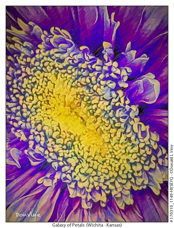 Galaxy of Petals_170310_1149-HXSEYQ