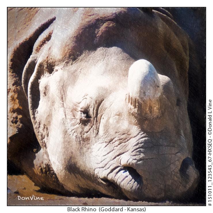 Black Rhino_151011_123543_67-HXSEQ