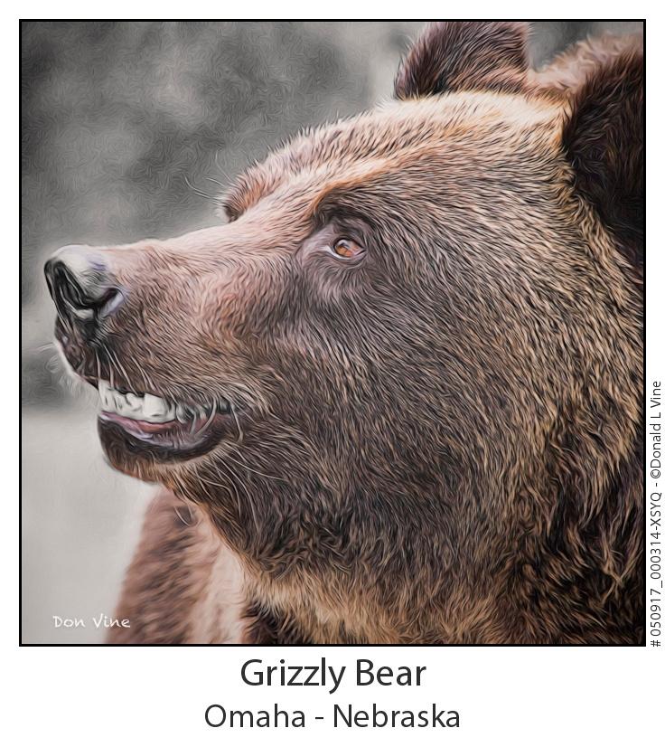 Grizzly Bear_050917_000314-XSYQ
